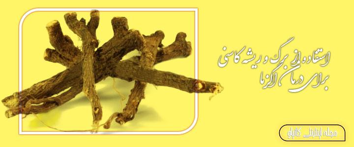 استفاده از برگ و ریشه کاسنی برای درمان اگزما